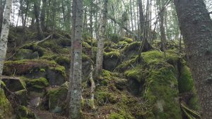 lånkeskog